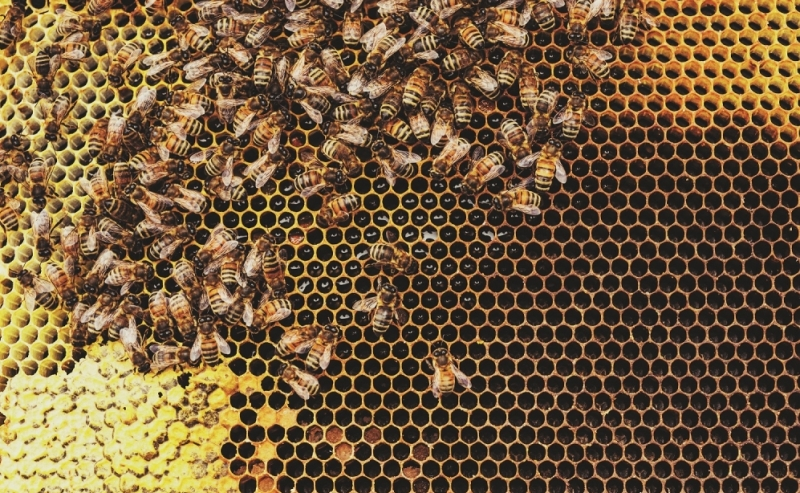 James Tryfonos considers the reform of the intangibles regime in FA 2019 and provides a refresher on how it works in practice on a pre-sale hive down