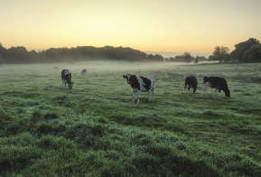 Julie Butler and Libby James examine the executors' responsibility to capital gains tax planning on farms